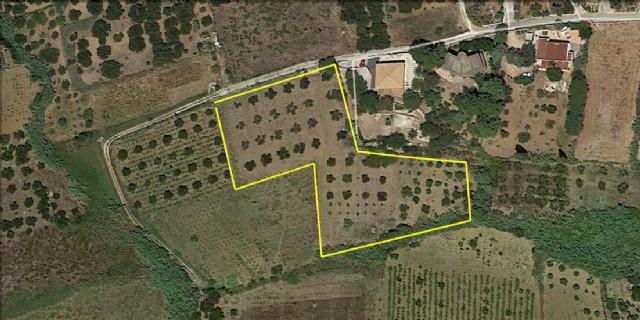 Terreno vendita ALCAMO (TP) - 99 LOCALI - 7000 MQ